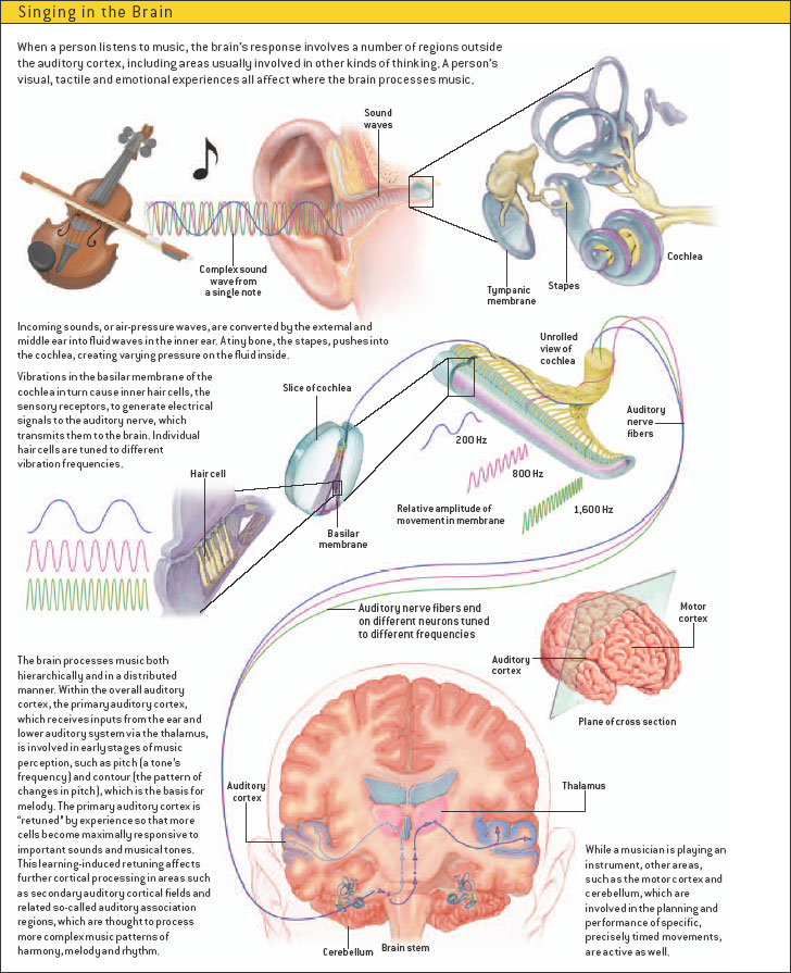 Cerebro y música, en imágenes | Tomatis-Madrid